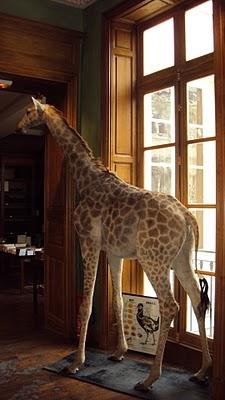 giraffe-Deyrolle